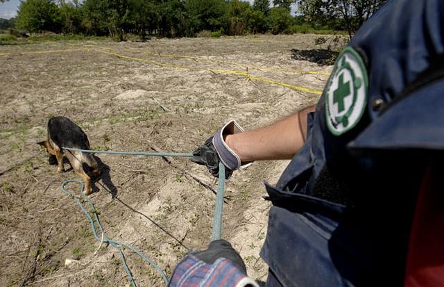 Bill Graham, Radio-Canada: Progrès dans le dossier des mines terrestres